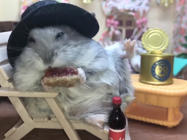 Happy hamster kicks back and enjoys his golden years