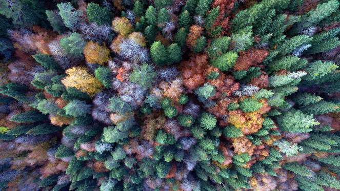 Slide 1 of 50: DUZCE, TURKEY - OCTOBER 21: A forest with all fall colors in a plateau during autumn season in in Duzce, Turkey on October 21, 2018. (Photo by Omer Urer/Anadolu Agency/Getty Images)