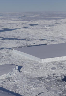 A tabular iceberg can be seen on the right, floating among sea ice just off of the Larsen C ice shelf. The iceberg's sharp angles and flat surface indicate that it probably recently calved from the ice shelf.