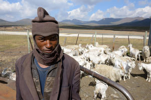 LESOTHO - APRIL 16 : Shepherds with herd of goats in the mountain on April 16, 2017 in Lesotho. (Photo by Frédéric Soltan/Corbis via Getty Images)