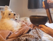 Head-tilting pup blown away by Tibetan singing bowl