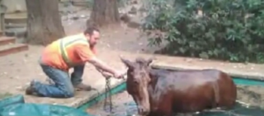 California man rescues trapped mule after losing his house to wildfires