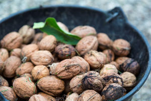 Walnuts from Burgundy. (Photo by: Jumping Rocks/UIG via Getty Images)