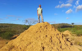 Scientists found termite mounds so big, you can see them via satellite