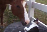Horse and cat strike up incredible friendship