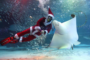 SEOUL, SOUTH KOREA - DECEMBER 07:  A diver wearing Santa Claus costume swims with fishes in the tank at COEX Aquarium on December 7, 2018 in Seoul, South Korea. Christmas has become increasingly popular over the years in South Korea, which is the only East Asian country to recognize Christmas as a national holiday.  (Photo by Chung Sung-Jun/Getty Images)