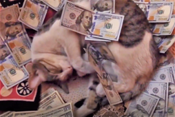 'Billionaire' cat living the high life while falling asleep on money
