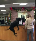 Jumping dog wins over hospital staff