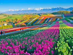 a colorful train sits on top of a lush green field: 