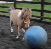 Pony becomes obsessed with playing soccer