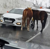 Friendly horses greet drivers