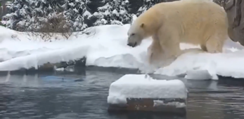 Polar bear has field day during icy New York winter storm