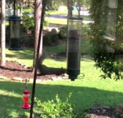Not so agile! Squirrel goes for a hilarious spin on bird feeder