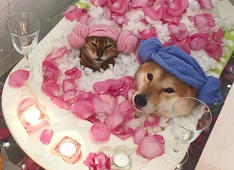 Cat and dog take a romantic bath together