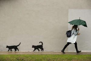 A woman hastily walks with an umbrella past graffiti depicting cats Friday, Feb. 15, 2019, in Los Angeles.