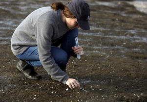 In this May 22, 2018 photo, Karlie Woodard of St. Jude Children's Research Hospital collects bird droppings at Kimbles Beach, Middle Township, NJ. Each spring, shorebirds migrating from South America to the Arctic stop on the sands of Delaware Bay to feast on masses of horseshoe crab eggs. It's a marvel of ecology. It's also one of the world's hot-spots for bird flu and a bonanza for scientists seeking clues to how influenza evolves so they just might better protect people.  (AP Photo/Jacqueline Larma)