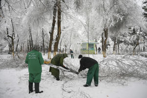 Afghan municipal workers from the department agricultural development cut the branches of a tree after it fall during a snowfall at Park Shahr-e-Naw in Kabul on February 21, 2019. (Photo by WAKIL KOHSAR / AFP)        (Photo credit should read WAKIL KOHSAR/AFP/Getty Images)