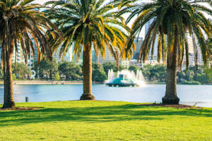 Three palm trees on a green meadow on a sunny day against Downtown Orlando's Lake Eola with its fountain and Orlando downtown district with a front of tall buildings in the background.