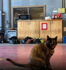 SF firehouse cat evicted over sanitation issues gets a new home
