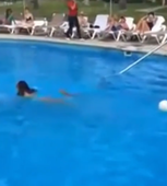 Watch: Rogue iguanas cause chaos at pool