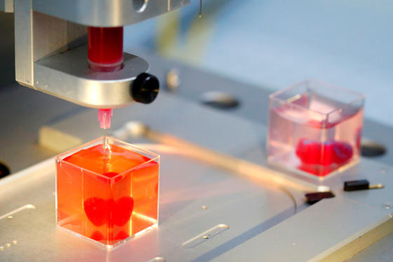 This photo taken on April 15, 2019 at the University of Tel Aviv shows a 3D print of heart with human tissue. - Scientists in Israel on Monday unveiled a 3D print of a heart with human tissue and vessels, calling it a first and a 'major medical breakthrough' that advances possibilities for transplants.