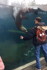 Sea lion flips over for joy while chasing zoo visitor's hand on the glass