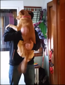 Dog can't contain excitement after seeing owner for first time in months