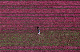 An aerial view of tulip fields near the city of Creil, Netherlands April 18, 2019. Picture taken April 18, 2019.  REUTERS/Yves Herman?     TPX IMAGES OF THE DAY