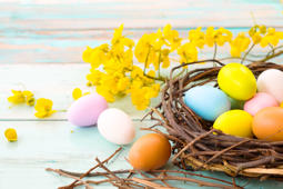 Colorful Easter eggs in nest with flower on rustic wooden planks background. Holiday in spring season. vintage pastel color tone. Close up composition.