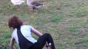 Girl taunts goose and gets a dose of instant karma