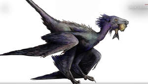 New feathered dinosaur species discovered