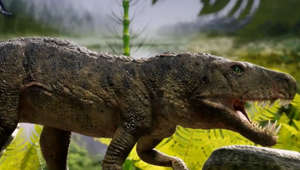 'Bonecrushing' crocodile that hunted dinosaurs 230M years ago discovered