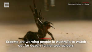 Australians warned to watch out for deadly spiders