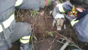 Puppies Pop Out from Underground After Being Rescued