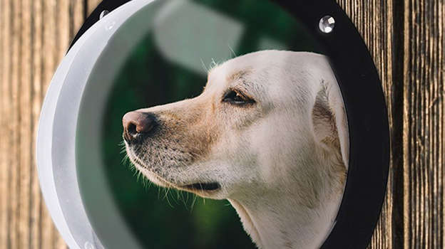 EXPAWLORER$31.99Shop NowDoes your pup love to police the neighborhood? Whether it's the front or backyard, your dog will be able to spot every person, squirrel, or gust of wind, thanks to this fishbowl-like dog window.
