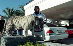 LAS VEGAS - CIRCA 1989: Mike Tyson poses with his white tiger during an interview at his home.  (Photo by:)