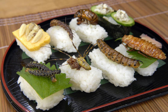 幻灯片 8 - 1: To celebrate Japan's traditional Sushi Day on November 1, here is a couple who like to make sushi that's far from ordinary: it's with creepy crawlies. Shiochi Uchiyama and his wife Chisato love their unusual cuisine so much that in 2008 Shiochi published a book, Fun Insect Cooking'.