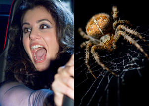 Georgian-born British singer Katie Melua screams as she sits behind the steering wheel of Opel's RAKe electric concept vehicle at the Cinema For Peace fund rising gala in Berlin, Monday, Feb. 13, 2012. (AP Photo/)House spider in centre of web, staring towards viewer.  Black background.  Cross shape on abdomen.  Taken in autumn, 2014.