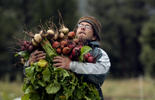 GOLDEN, CO - SEPTEMBER  12:  Owner Jason Plotkin carries white, golden and red beets at his Golden Acre Farm, a small organic veggie farm next to North Table Mountain in Golden, on Friday, September 12, 2014. Plotkin  was harvesting  produce which he will sell the next day at the Highlands Farmer Market. (Denver Post Photo by Cyrus McCrimmon)