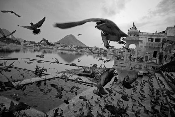 Birds just flying over the Pushkar lake in Rajasthan.