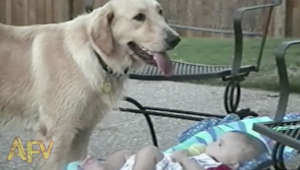 Dogs and Babies Mashup