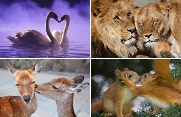 Dia 1 van 31: Animals in love