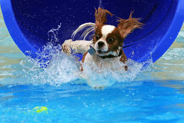A dog emerges from a water slide on August 17 in Hutchinson, Kansas.