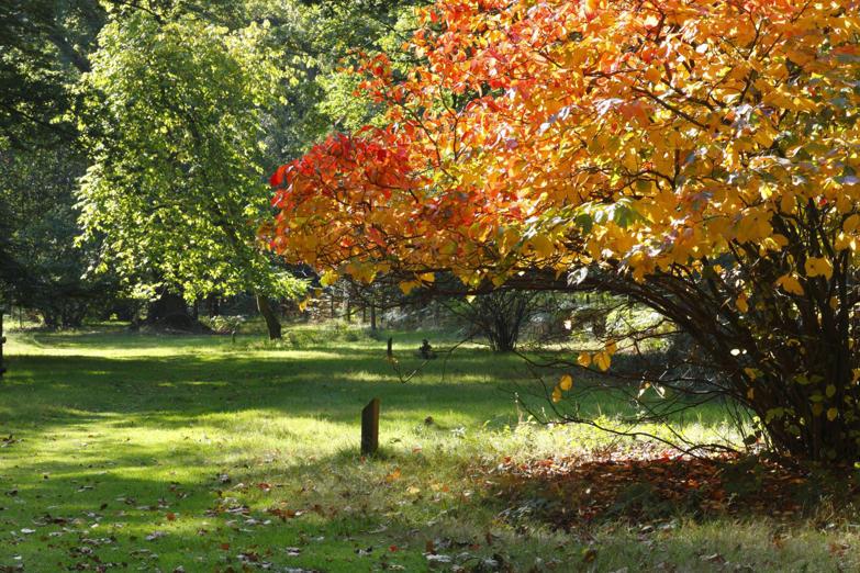 Forest of Dean, England, U.K.