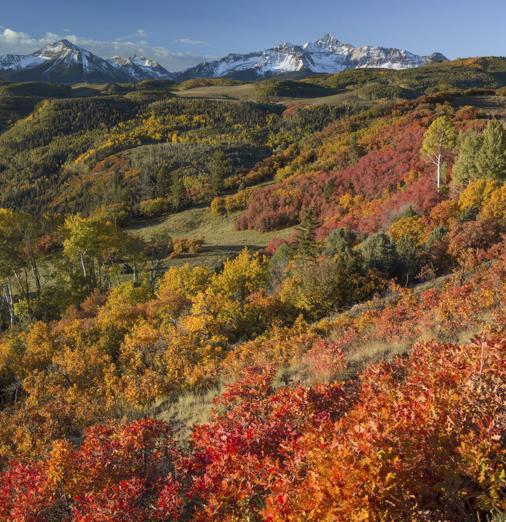 Aspens, Colorado, U.S.A.