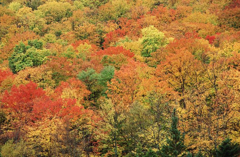 Adirondacks, New York, U.S.A.