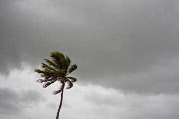 A palm tree blows in the wind as dark clouds of Hurricane Isaac approach, August 26, 2012.