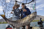 Salmon fishing guide Dave Grove, left, nets a fall Chinook for David Moershel while fishing on the Columbia River near Desert Aire, Wash., Sept. 8, 2014.