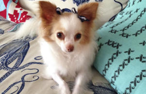 "Tsarina Natasha Fetchlana Poochkin canine Russian royalty who fled, seeking ""pawlitical asylum"" in Brooklyn."