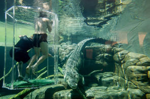 Swim with crocodiles in Australia